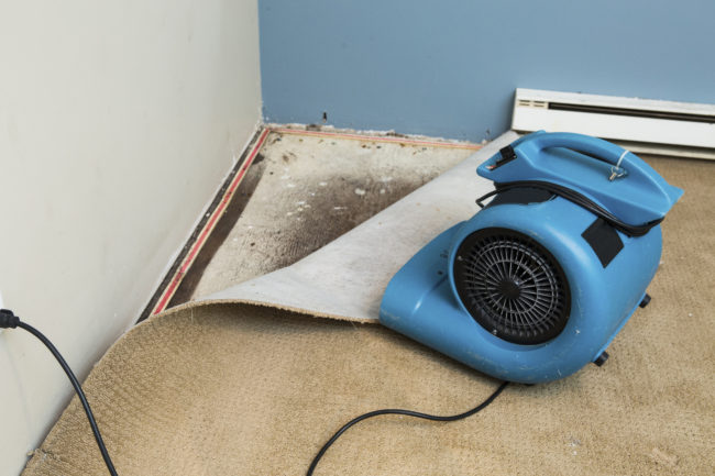 How To Tell If You Can Restore Your Carpet J Amp S Steamway